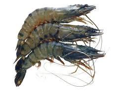 萄葡糖胺主要來源是貝殼類海產,一般難以從食物吸收。